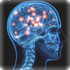 cerebroluces